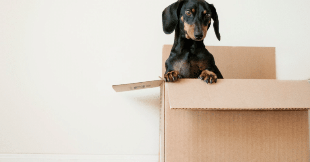 """Think Free Shipping is Free? Here's How the """"Amazon Effect"""" Hurts Small Businesses."""